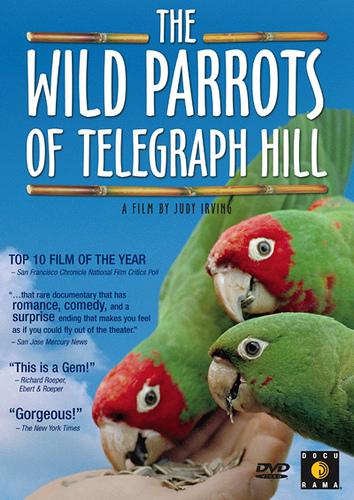 wildparrots